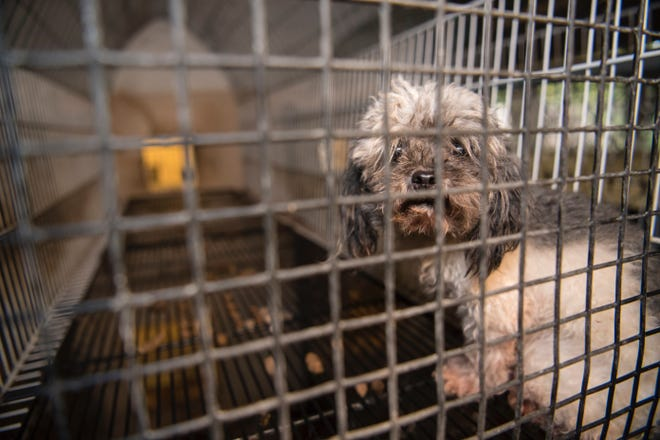 Royal Oak banned pet stores from selling dogs and other small animals in a move to keep puppy mills, where dogs can be treated inhumanely, out of town.
