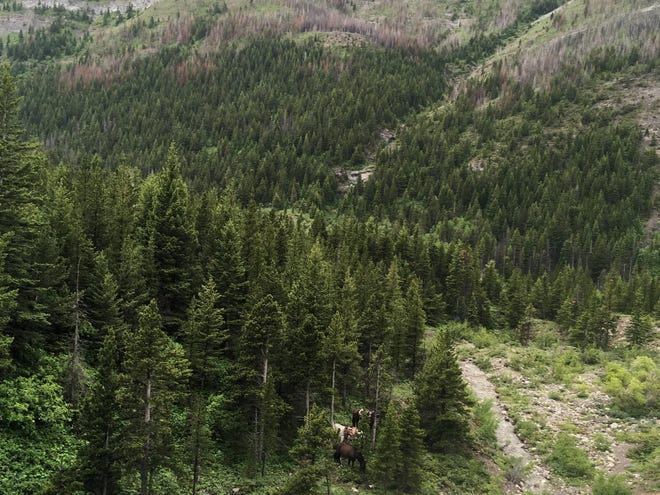 Can you spot the horses? The Bob Marshall Wilderness hides treasures in its vastness.