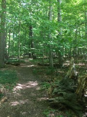 Ancient trees provide shadowed illumination to the seemingly endless trails of Smith Woods.