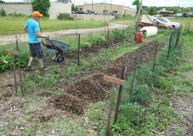 Doug Reed delivers a wheelbarrow full of mulch to the Growing Greens garden.