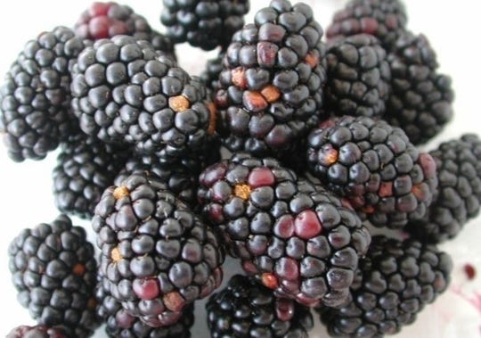 Diagnosing a blackberry issue can be challenging, as there can be more than one culprit impacting the fruit.