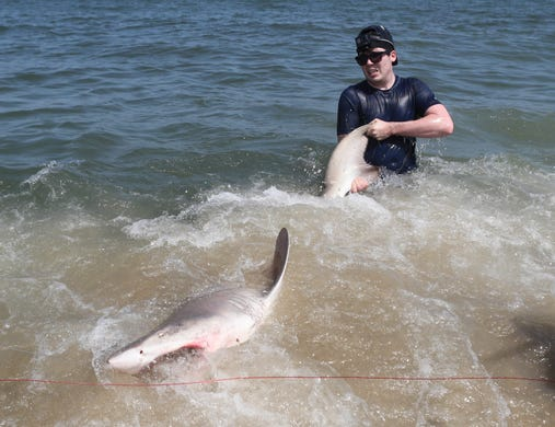 When is Shark Week 2019? Here's the schedule and how to