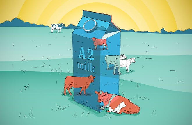 Five things everyone should know about A2 milk.