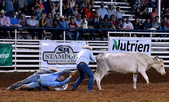 Cowboys struggle to hold on during the Wild Cow Milking competition at Wednesday's Texas Cowboy Reunion in Stamford.