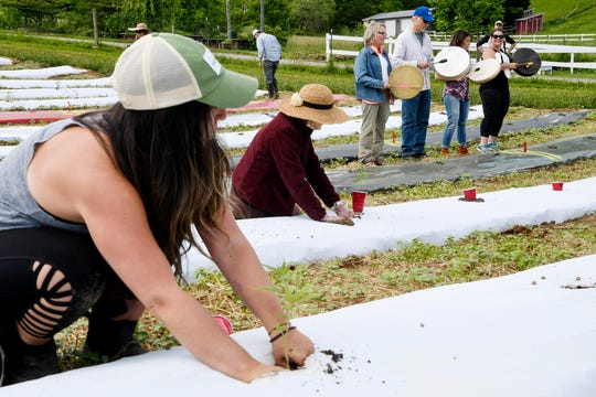 Volunteers place hemp plants into the ground as other play drums in a ceremonial planting at Franny's Farm in Leicester May 13, 2019.