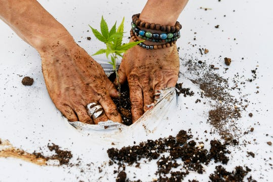 Franny Tacy packs earth around a hemp plant at Franny's Farm in Leicester May 13, 2019.