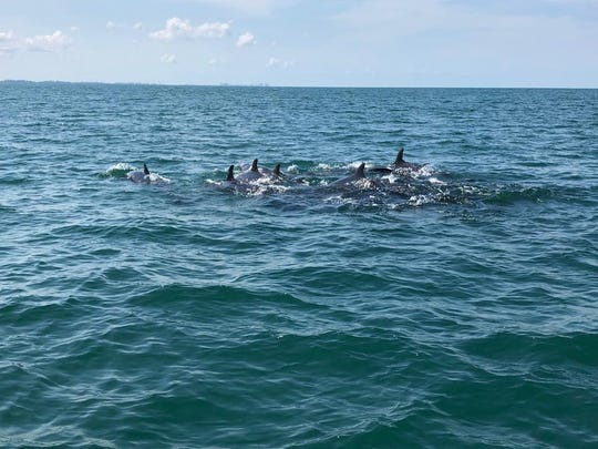 A pod of pilot whales Cpl. Jim Brown encountered on Thursday, July 4, 2019.