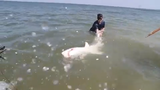 Delaware shark fisherman catch, release and find adventure working with sharks in federal tracking program.