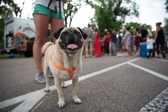 Check out PugFair on Saturday in Norwood.