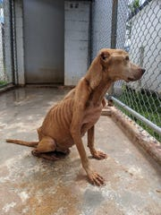 Dogs found emaciated on July 3, 2019 led to an arrest, according to Guam Animals In Need.
