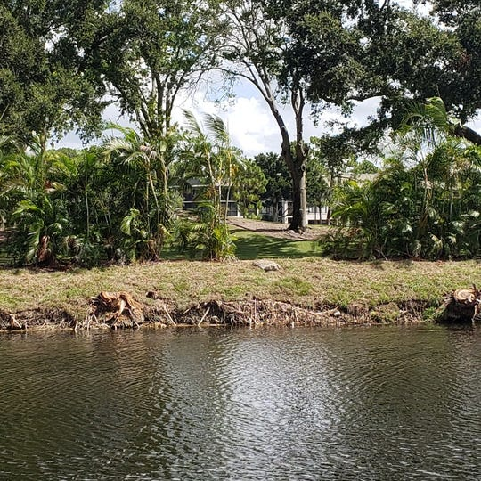 A view of the canal bank across from Longboat Drive after vegetation removal by the South Florida Water Management District