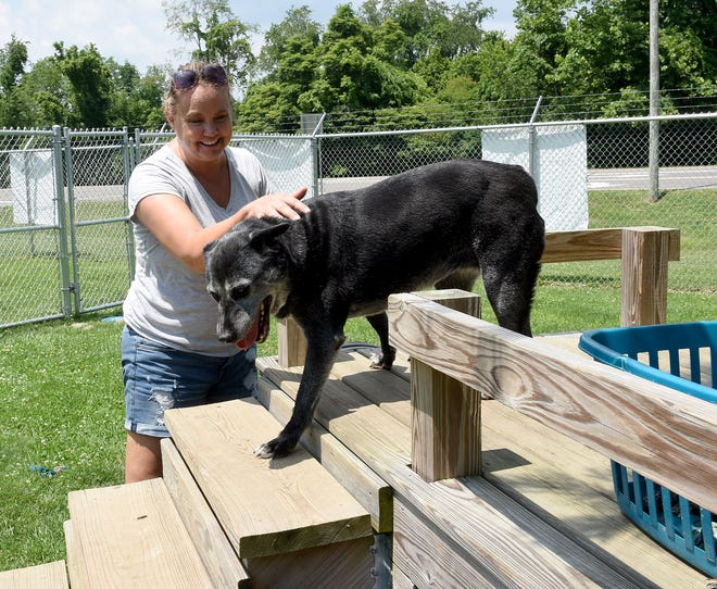 Volunteer Julie Mayer plays with six-year-old Australian cattle dog mix Patricia in one of the yards of the Licking County Animal Shelter. Patricia, who is available for adoption, has been at the shelter since May 1, 2019.