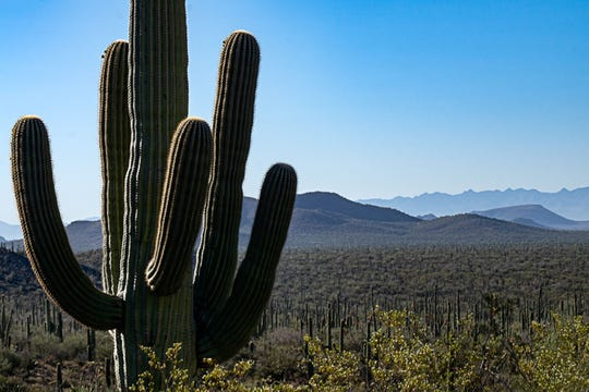 Arizona is more than saguaros. But do outsiders know that?