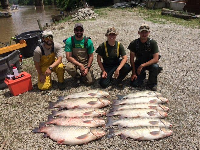 Michigan DNR staff John Buszkiewicz, Lucas Nathan, Alexa Curtis, Nick Steimel (All MDNR) showcasing a successful capture event from the Sandusky River during a large multi-agency response/control effort in 2018.