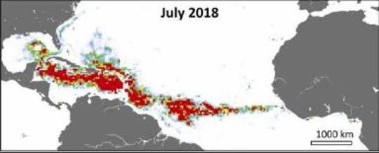 "The ""Great Atlantic Sargassum Belt"" can be seen stretching from the Gulf of Mexico across the Atlantic Ocean to the coast of western Africa."