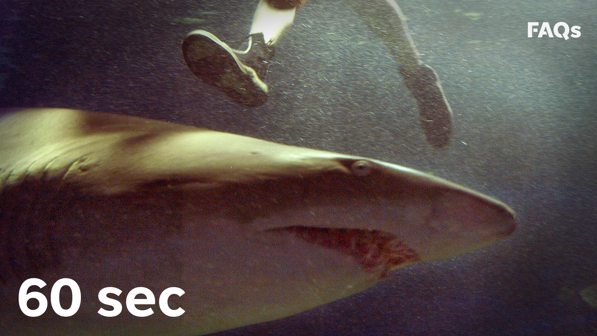 How science is using sharks to cure cancer, Alzheimer's
