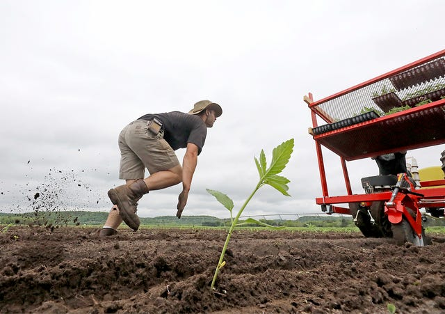Hemp revival: An opportunity for stressed Wisconsin farmers
