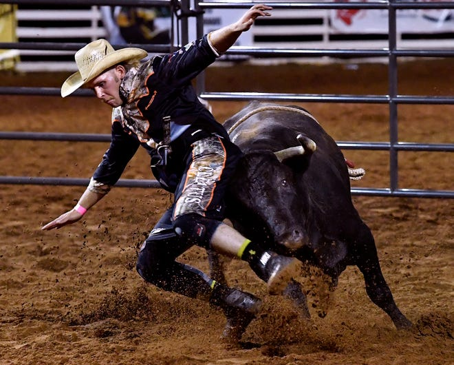 Jeffrey Williams gets the ejection seat during bullfighting at the 89th Texas Cowboy Reunion in Stamford Wednesday. Unlike in Spanish bullfighting, the bull remains unharmed during the event.