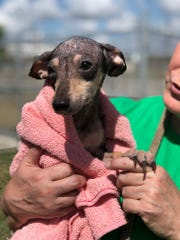FurEver United Rescue is seeking fosters for dogs found in zip-tied totes at Corpus Christi Medical Center-Bay Area Hospital. They are also seeking fosters for dogs found at Century 16 and IMAX movie theater a few hours later.