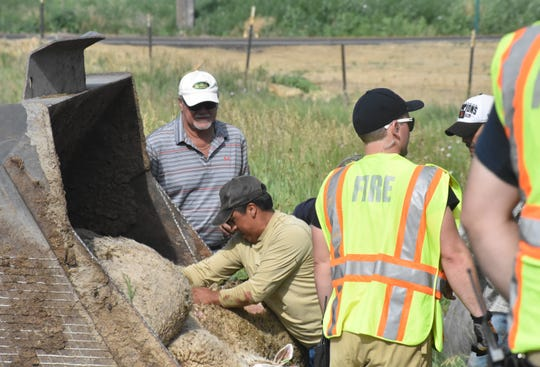 Workers remove dead sheep killed when the semi-tractor trailer in which they were being hauled was struck by another semi near Ault on Monday morning.
