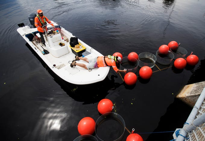 Travis Knight and Robert Clendening, both hydrologic technicians with the U.S. Geological Survey Southeast Region and Caribbean-Florida Water Science Center place floating plastic tubes at the Franklin Locks on the Caloosahatchee River on Monday 7/8/2019 that will used in a  scientific experiment studying cyanobacteria or blue-green algae. The scientists will study the affects of of nutrients such as nitrate, ammonia and/or phosphorus and and assess what will happen to the algae.