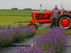 New lavender farms, including one paired with cherries, are coloring Wisconsin purple