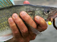 Global warming could mean fewer fish for sport fishing, more die-offs across US