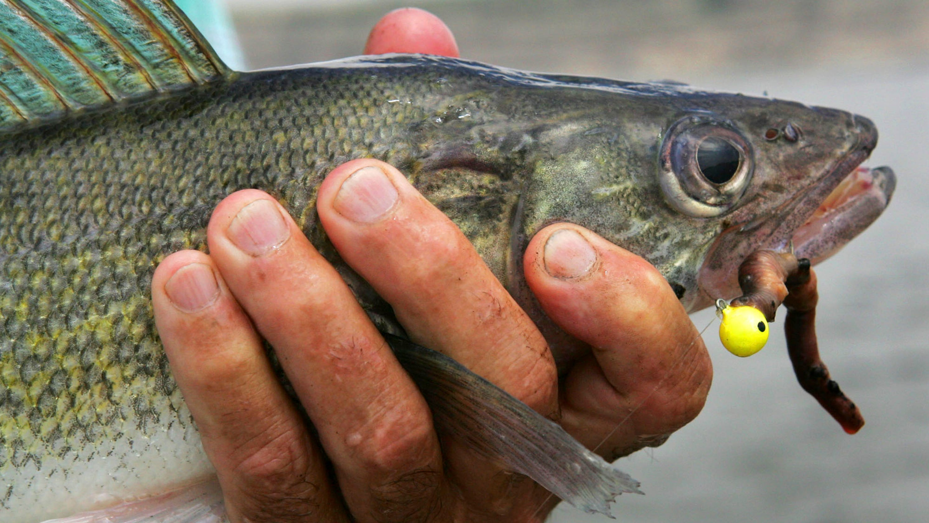 Global warming is killing fish, hurting sport fishing industry