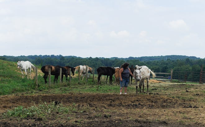 Christina Bennett has been operating Triple-B-Ranch Horse Rescue and Rehabilitation center since 2004 after she volunteered to take on a horse form an animal cruelty case.
