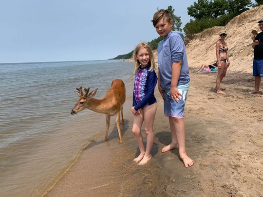 Kathleen Kennedy Ferris snapped this photo of her children, Lola and Jack, with a deer at Saugatuck State Park on Saturday, July 6, 2019.