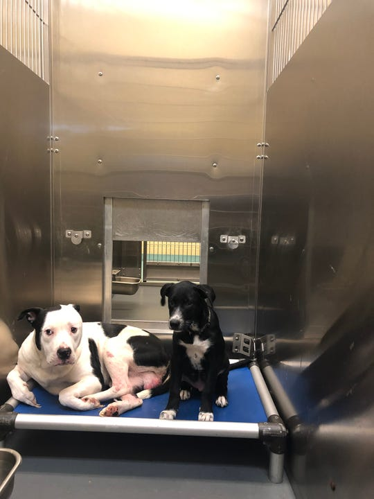 Thirty animals, some already dead by the time they arrived, were surrendered to Memphis Animal Services Tuesday morning. This is the second time in two months that dozens of animals have been surrendered at one time to Memphis' animal shelter.