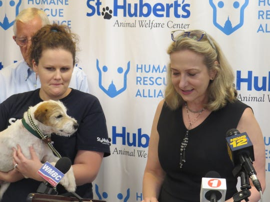 A St. Hubert's Animal Welfare Center staffer holds Pete (rescued from a home last month with 200 other dogs from a home in Kingwood), during a press conference to announce St. Hubert's is merging with the Humane Rescue Alliance of Washington D.C. to create first regional, community-based, multi-state animal welfare organization in the nation.
