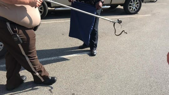 Dickson Animal Control Officer Ricky Manley captures rat snake from vehicle floorboard in Downtown Dickson.