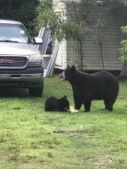 Bears were looking for food in a backyard in Immokalee