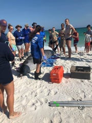 A rare beaked whale, one of the deepest-diving whales, was found beached on Gulf Islands National Seashore on Monday afternoon. A team of rescuers from the Emerald Coast Wildlife Refuge worked to save it, but the whale died on the beach just before a veterinarian arrived. A necropsy is scheduled to be performed Tuesday.