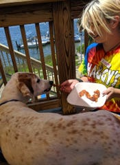 A Shaggy's employee gives Wilson, a 14-year-old Pointer mix, some slices of bacon on Monday, July 8. It was Wilson's last day on earth and his humans wanted to make sure he had a great last day.