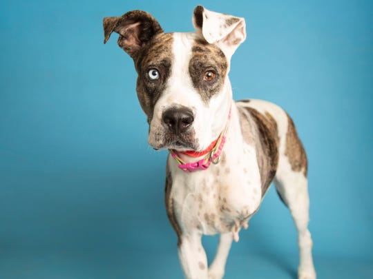 Jeri is available for adoption and can be met by arranging a meet-and-greet. For more information, call 602-997-7585 and ask for animal number 591006.