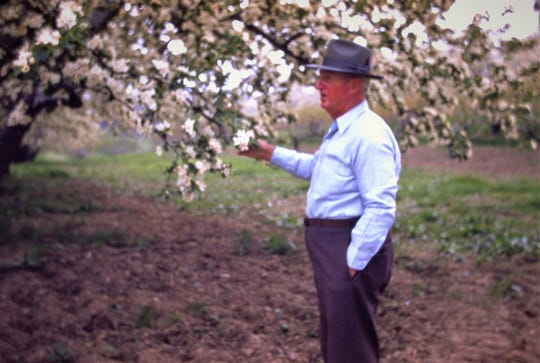 My great-grandfather and second of three generations of fruit farmers - Clayton E. Fahs in his orchard. Probably taken in 1959/60.