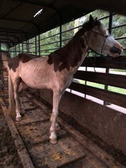 The Bossier Parish Sheriff's Office is looking for the owner of a horse that was found on Still House Road in Plain Dealing.