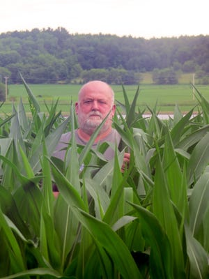 After a very slow start, the corn crop on the Schumacher farm in Fall Creek has taken off.  One week earlier, this field was knee high, but by July 4th, hot and humid weather in Eau Claire County gave it a real boost. The height of this corn may be an anomaly as compared to some parts of the state.