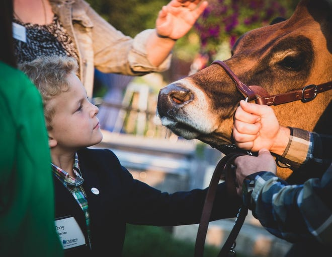 """Troy Vandenberg, who has benefited from the medical care at Children's Hospital of Wisconsin, meets """"Highway,"""" the cow at the 2018 Dairy Cares of Wisconsin Garden Party. Troy was one of the non-profit's keynote speakers. Highway was visiting with guests."""