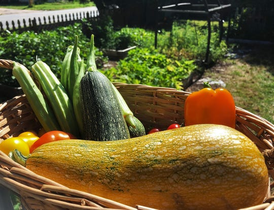 Veggie tales from a bountiful Mendenhall garden.