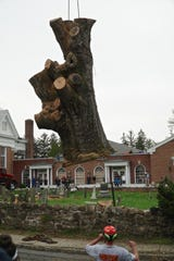 A part of the Great Oak's trunk being airlifted after the tree was cut down.