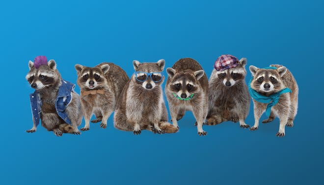 Learn about recycling do's and don'ts with the help of these raccoons.
