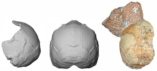 This image provided by the University of Tuebingen in Germany shows the Apidima 1 partial cranium fossil, right, with a piece of rock still attached, and its digital reconstruction from a posterior view, middle, and a side view, left. The rounded shape of the Apidima 1 cranium is a unique feature of modern humans and contrasts sharply with Neanderthals and their ancestors.