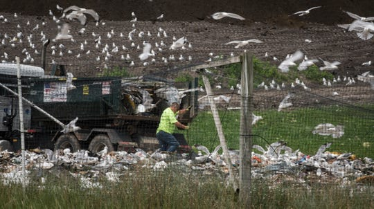 A flock of gulls converge around a truck in search of sustenance Monday, July 8, 2019, at the Muskegon County municipal landfill in Ravenna, Michigan.