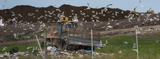 Seagulls search for sustenance Monday, July 8, 2019, at the Muskegon County municipal landfill in Ravenna, Michigan.