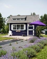 Sixteen Sprigs Lavender Farm in Lansing.