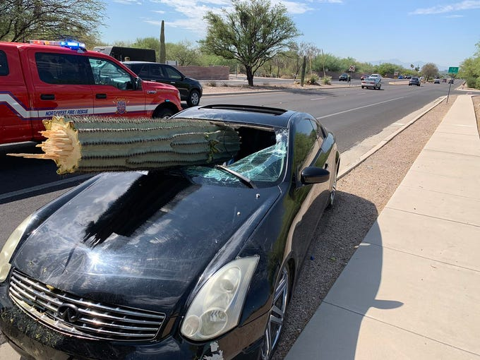 Vehicle vs saguaro cactus collision