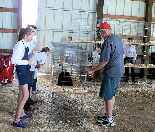 Exhibitor, chicken and judge, a crucial time.